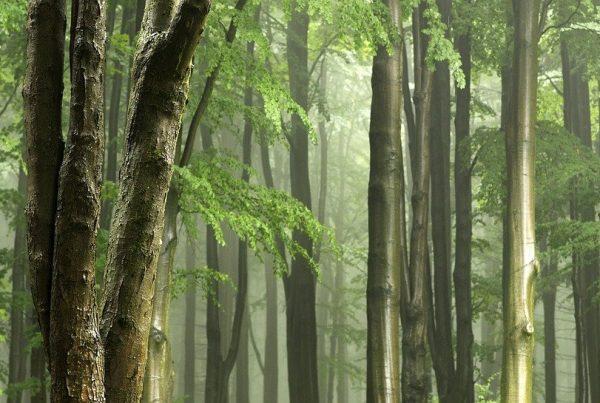 tipi-di-legno-bioedilizia