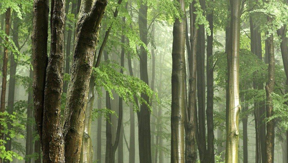 Quali sono i tipi di legno usati per le case in bioedilizia?